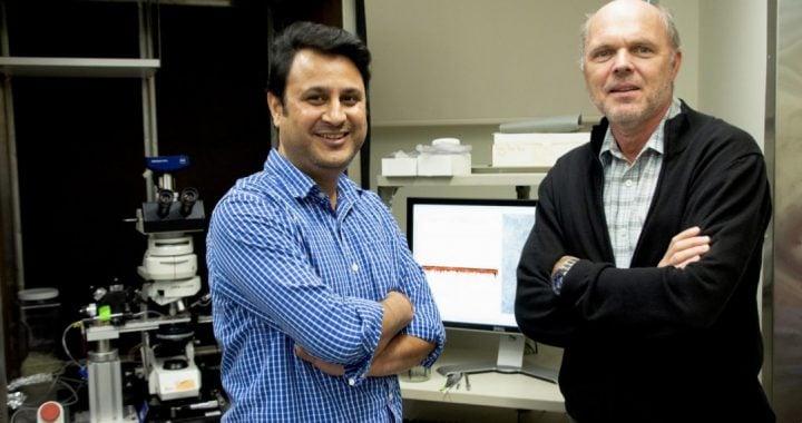 Bhanu Tewari and Harald Sontheimer